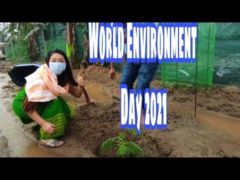 World Environment Day 2021     Ecosystem Restoration    Lipika Brahma    Vlog#49