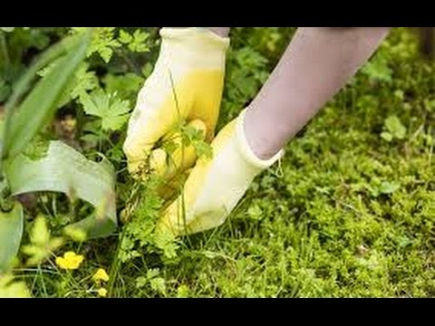Best way to keep weeds out of your flower garden. - YouTube