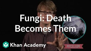 Fungi: Death Becomes Them | Crash Course biology| Khan Academy