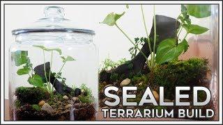 Sealed Terrarium Build