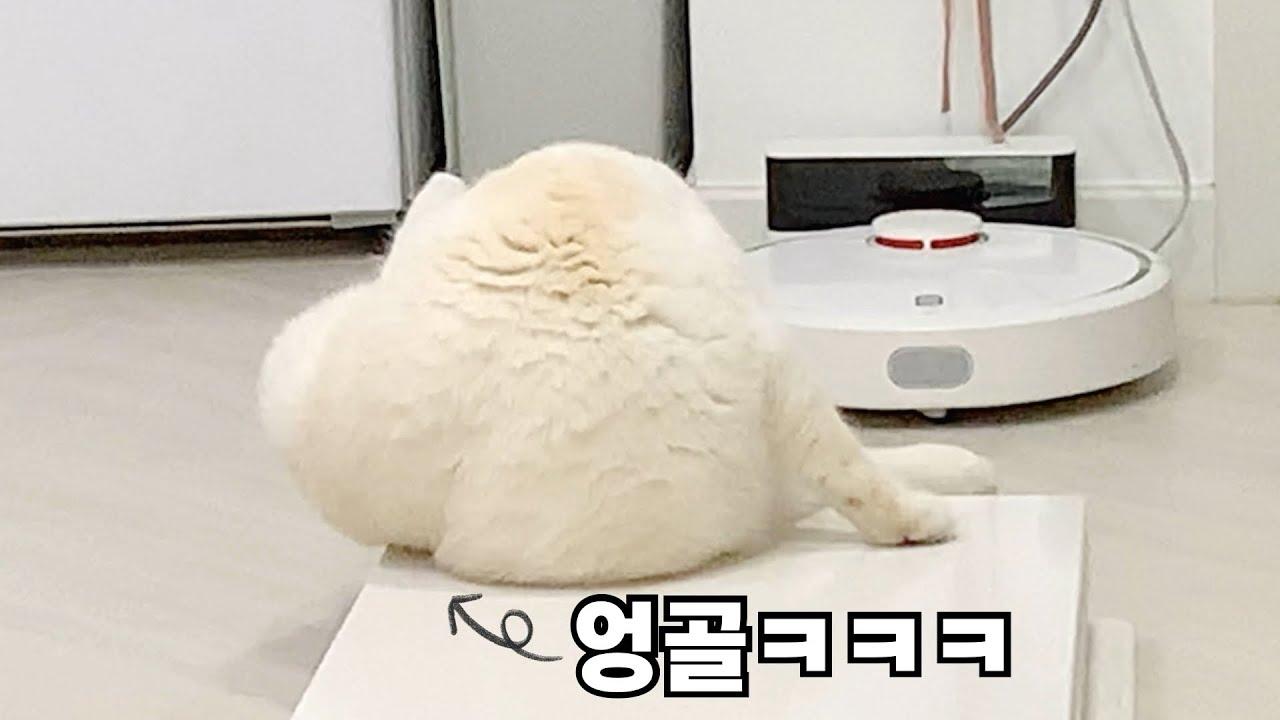 고양이도 엉덩이 골 있음ㅋㅋㅋㅋㅋ🤭