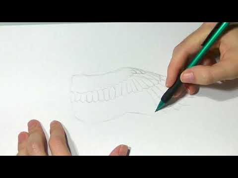 Drawing Animals: From Anatomy to Rendering : Bird Wing Anatomy