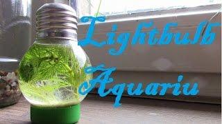 Building your Own DIY Light Bulb Aquarium