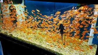 My First Aquarium FISH PET!