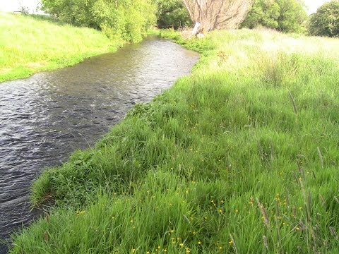 Small Stream Fly Fishing, Spring Creek Browns.
