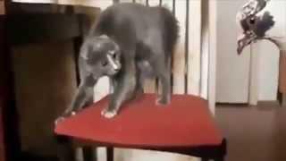 Смешные кошки -  лучшие моменты 2014