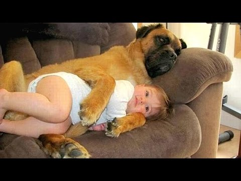 Big Dog and Baby Compilation