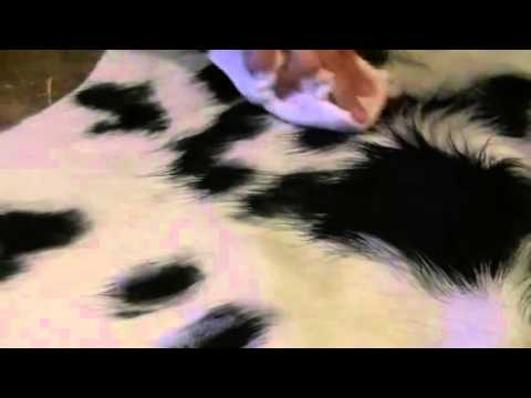 Rug Wash, Inc.™ - Animal Skin Rug Cleaning