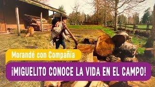 Morandé con Compañía 2016 - Miguelito conoce la vida en el campo - Capítulo 38