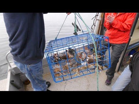Crabbing in the Douglas Channel - Kitimat, British Columbia