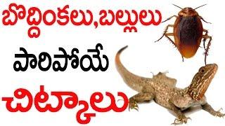 బొద్దింకలు,బల్లులు పారిపోయే చిట్కాలు | Lizards, Cockroaches Escaping Tips