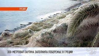 В Греции 300-метровая паутина окутала пляж