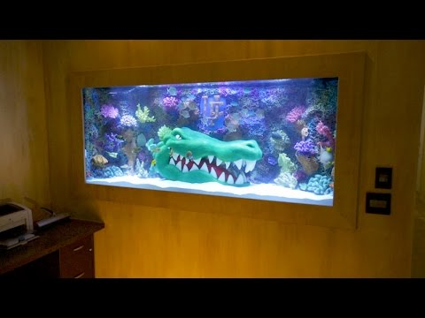 A Great Gator Tank for Titus O`Neil