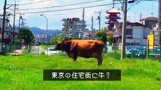 八王子で楽しめる絶品TOKYOブランド牛乳と牧場体験