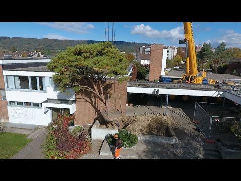 Fischer Garten- und Landschaftsarchitektur AG: Flying Trees