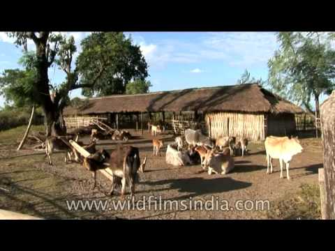 Indian village cow shed youtube for Terrace shed designs india