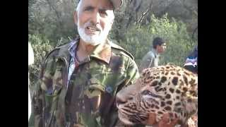 Leopard Killed By Hunters in Village Dingal Dadyal