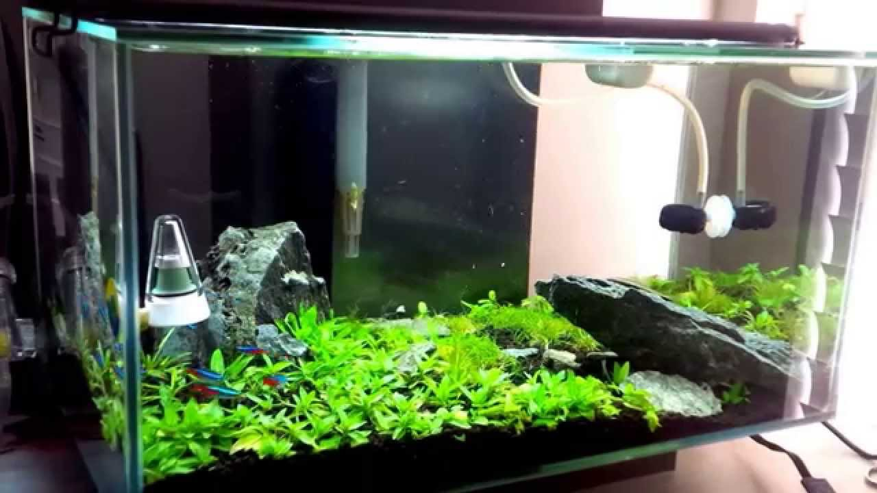 Planted Tank Iwagumi Style On Fluval Edge 6 Gallon With