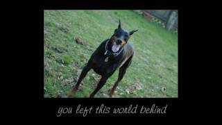 This One's For You Luke! Rip Aug 25th, 2010 - Doberman Memorial