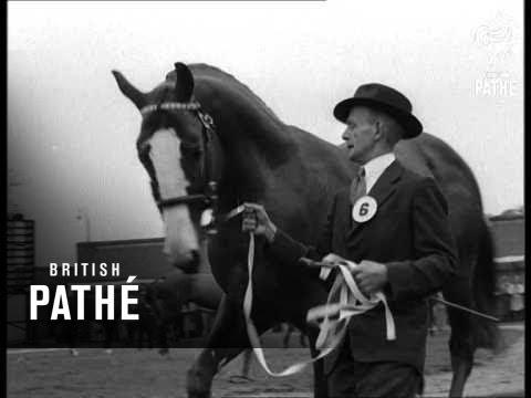 Stallion Show (1960)