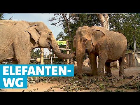 Die älteste Elefanten-WG