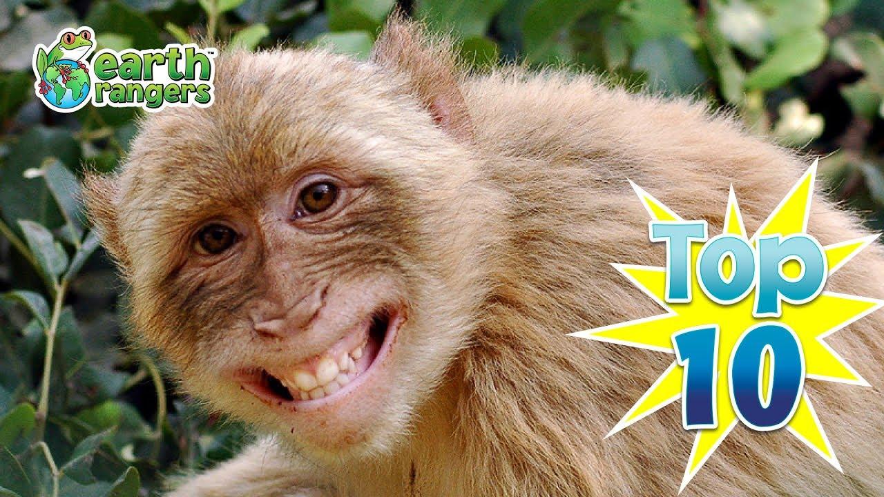 Hewan Saja Tertawa Mengapa Kita Tidak Tertawa Jika Tertawa Itu