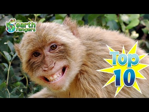 Top 10: Smiling Animals