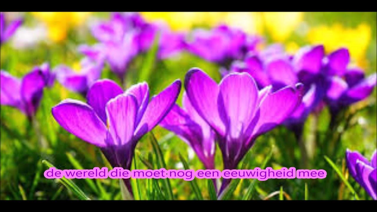 8c529207a479c9 Louis Neefs - Laat ons een bloem (lyrics) - YouTube