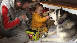 My Baby Learning to Feed My Huskies is TOO PURE For This World!!...