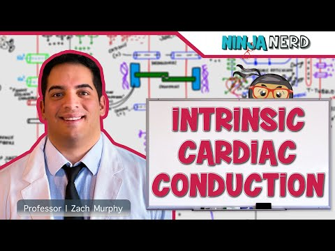 Cardiovascular | Electrophysiology | Intrinsic Cardiac Conduction System | Part 1