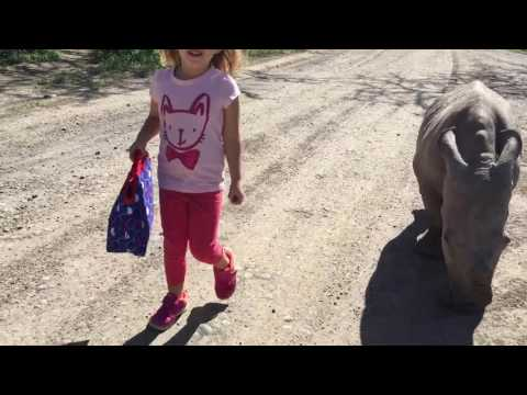 Young Girl Goes For A Stroll With Endangered Southern White Rhino Named Ringo