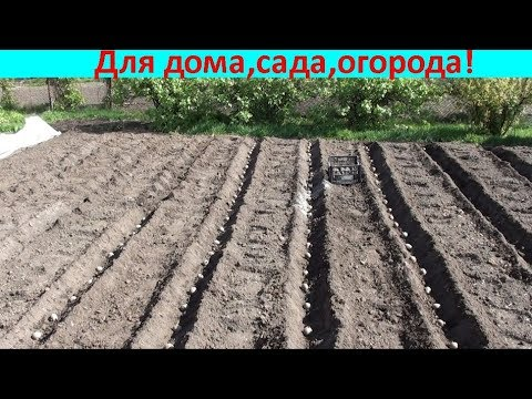Удобный способ посадки картофеля!!!