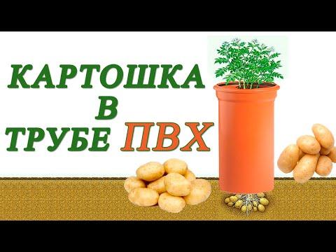 КАРТОШКА В ТРУБЕ