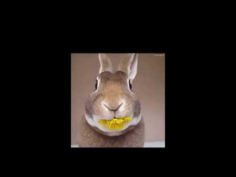 Good Morning-funny Animals Gifs
