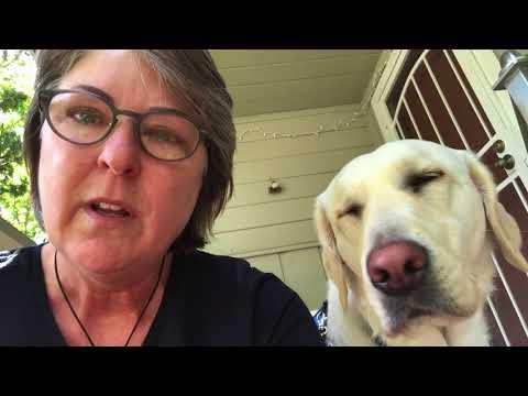 Dogs4Diabetics Client/Dog Team