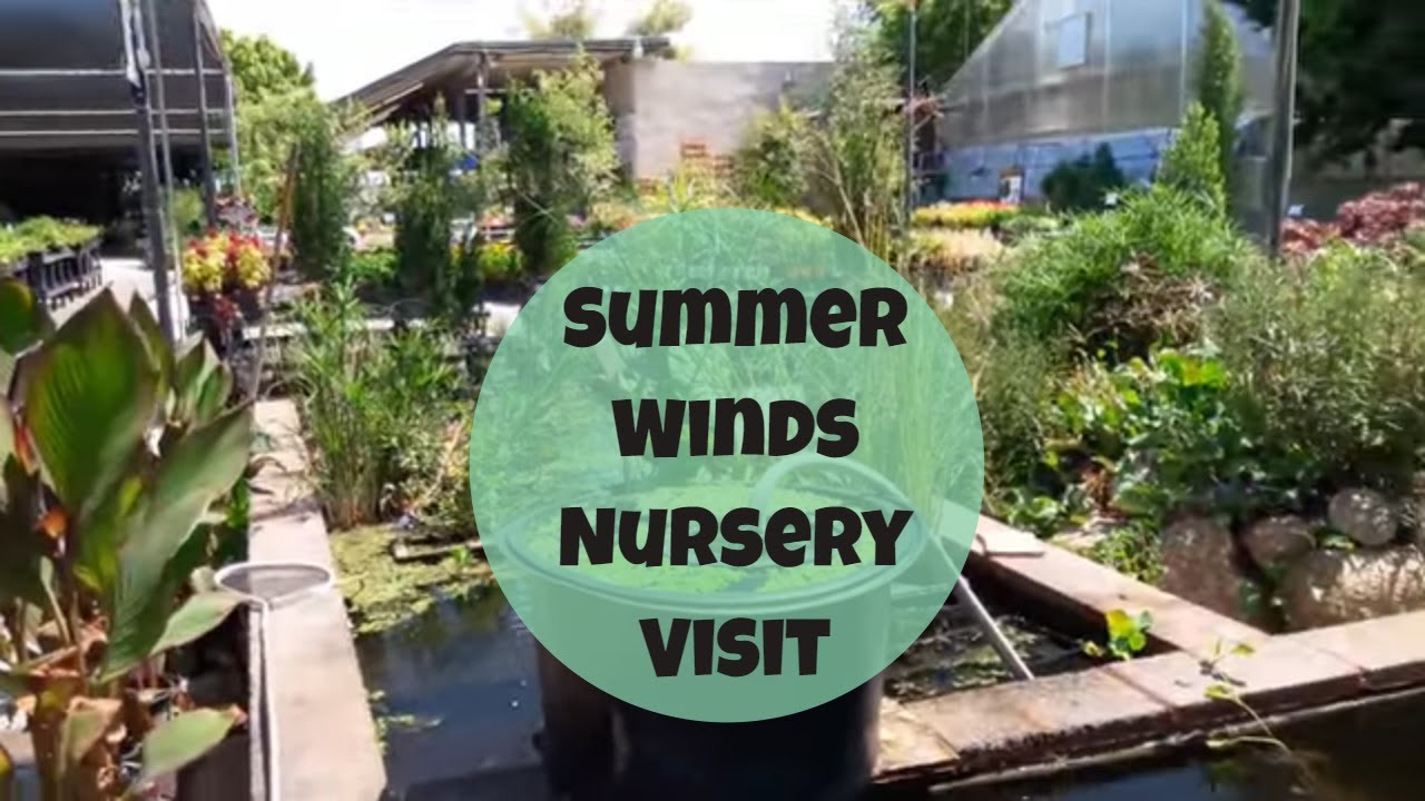 Summer Winds Nursery Visit Talavera Pottery
