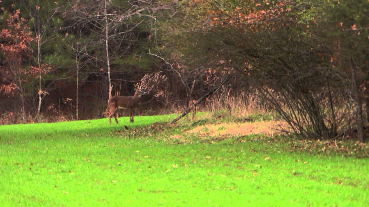 Hunting deer in mississippi with the family youtube for Mississippi out of state fishing license