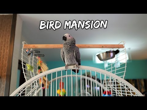 My Bird's New Mansion Cage | Vlog #320