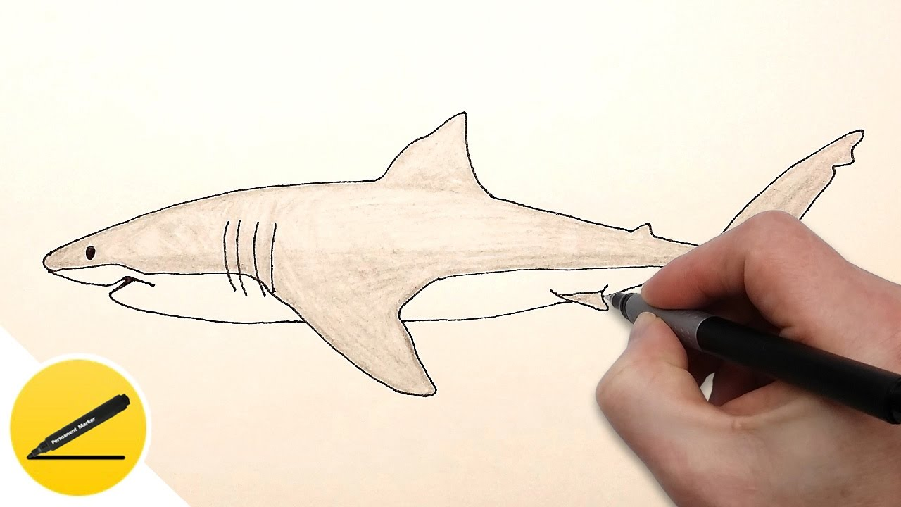 shark animals drawing [ 1280 x 720 Pixel ]