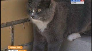 Бездомные кошки мешают жителям многоквартирных домов