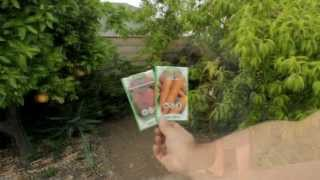 How to Plant Carrot and Beet Seeds by the California Gardener