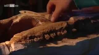 Monster aus der Tiefe - unbekannte Urzeittiere