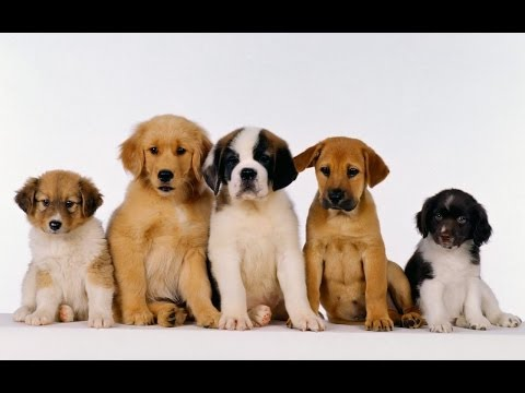 puppy-socialization:-how-to-socialize-your-puppy