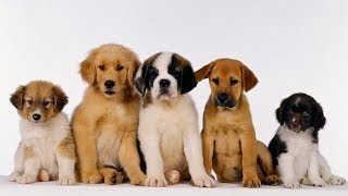 Puppy Socialization: How to Socialize Your Puppy