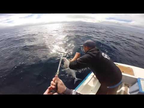 Offshore Jigging For Samson Fish