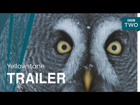 Yellowstone: Wildest Winter to Blazing Summer | Trailer - BBC Two