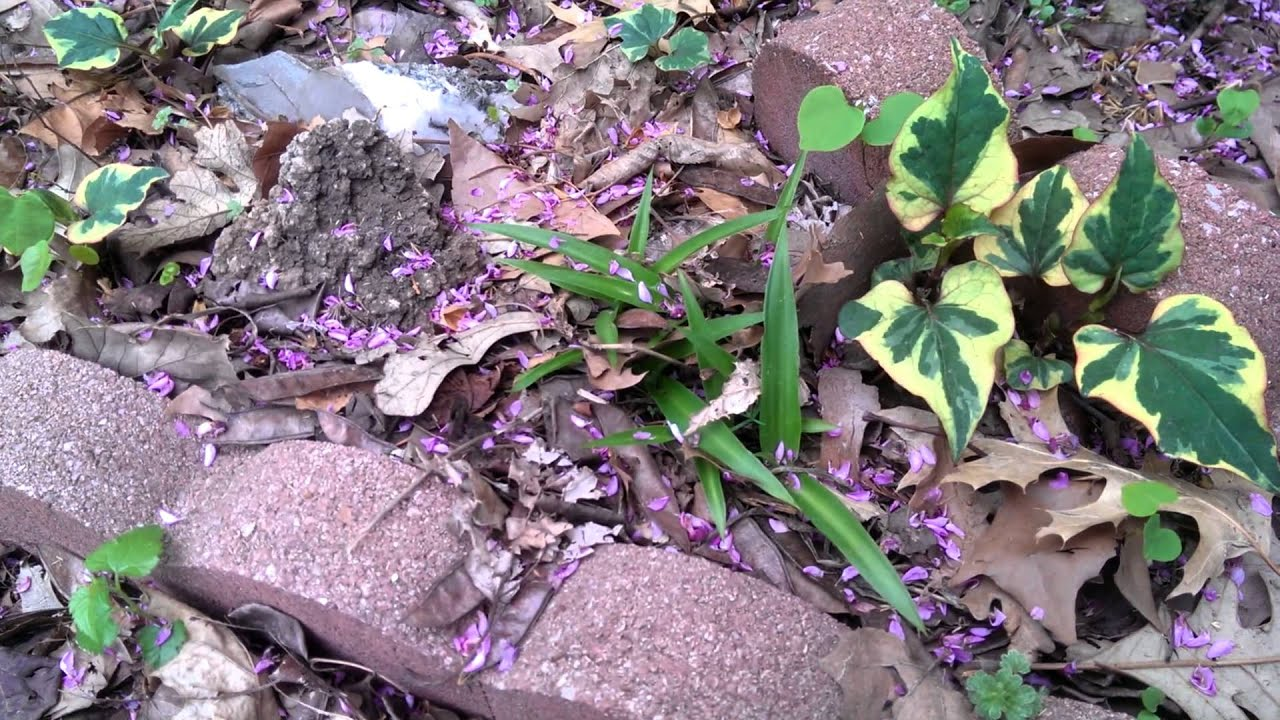 Plants To Grow In The Shade Under Trees 3 Youtube