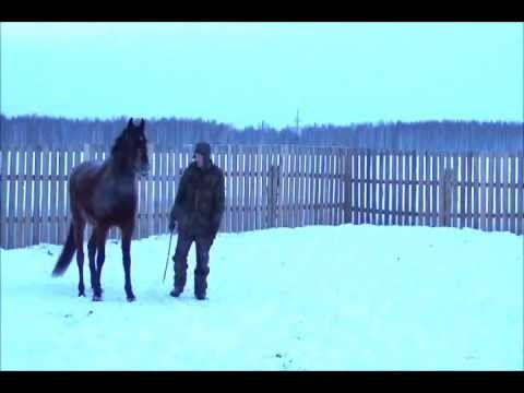 Укладывание лошади
