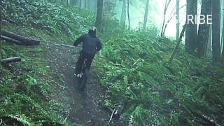 Amazing Freeride in Forest