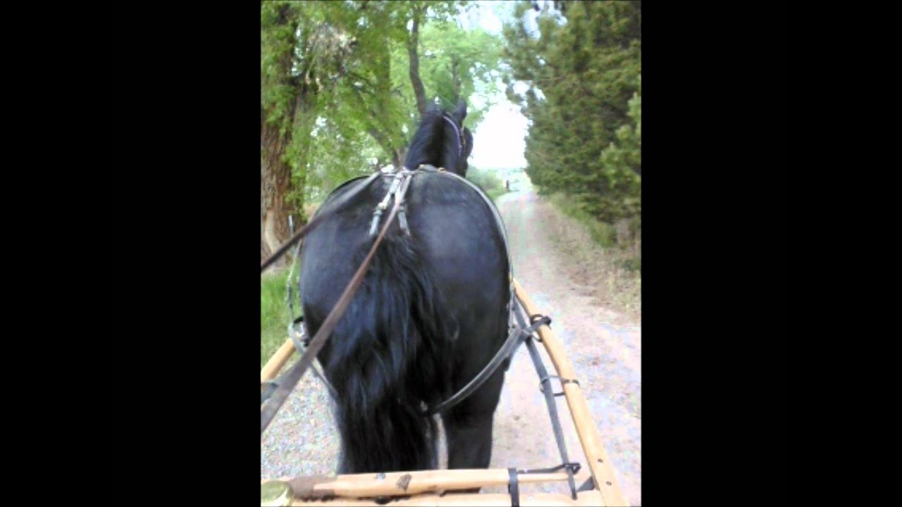 I Like Big Black Butts And I Can Not Lie  Percheron -8824